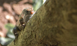 Маленькая ящерица взбираясь вверх дерево Стоковые Изображения