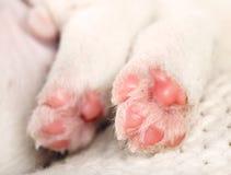 Маленькие лапки белого щенка Стоковые Изображения
