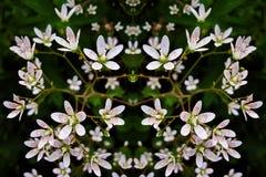 Маленькие белые цветки - предпосылка Стоковые Фото