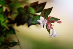 Маленькие белые цветки стоковая фотография