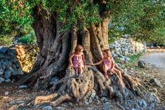 Маленькие двойные девушки сидят и старое старое оливковое дерево Стоковая Фотография RF