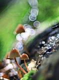 маленькие грибки прессформы семьи Стоковые Фото