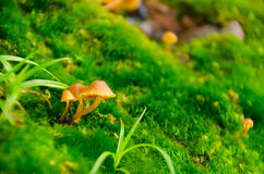 Маленькие грибы Стоковая Фотография