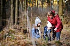 Маленькие девочки и их бабушка принимая прогулку в лесе Стоковая Фотография RF
