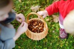 Маленькие девочки собирая жолуди на день осени Стоковое Изображение
