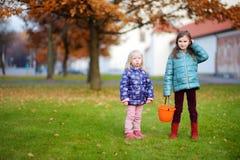 Маленькие девочки собирая жолуди для производить и играть на красивый день осени Стоковое фото RF