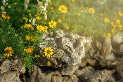 Маленькие желтые цветки в утре Стоковые Изображения