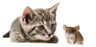 маленькие котенок и мышь стоковая фотография rf