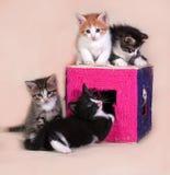 Маленькие котята сидя на и вокруг царапать столбы на сером цвете Стоковая Фотография RF