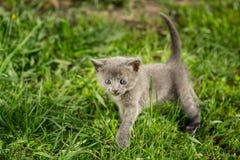 Маленькие котята tabby на зеленой траве Стоковое Изображение RF