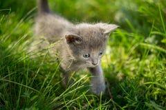 Маленькие котята tabby на зеленой траве Стоковая Фотография