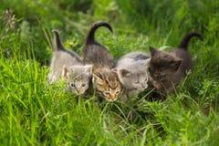 Маленькие котята tabby на зеленой траве Стоковое фото RF
