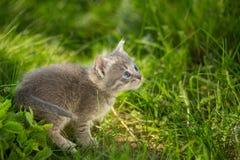 Маленькие котята tabby на зеленой траве Стоковые Изображения RF