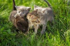 Маленькие котята tabby на зеленой траве Стоковые Изображения