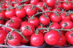 маленькие красные томаты Стоковое Изображение RF