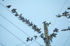 Маленькие птицы сидя на проводе против неба Стоковые Фотографии RF