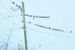Маленькие птицы сидя на проводе против неба Стоковые Фото