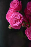 Маленькие розы Стоковые Изображения