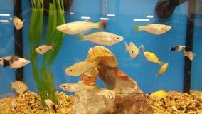 Маленькие рыбы Стоковая Фотография RF