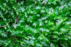 Маленькие свежие зеленые растения в природе в Таиланде Стоковое фото RF