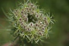 Маленькие семена Стоковые Фотографии RF