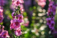 Маленькие фиолетовые цветки в утре Стоковые Фотографии RF