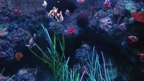 Маленький аквариум заплывания рыб видеоматериал