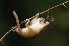 Маленький альпинист Стоковые Изображения RF