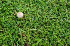 Маленький белый гриб Стоковые Изображения RF
