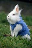 Маленький белый кролик стоя в зеленой траве Стоковое Изображение RF