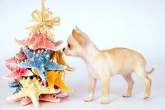 Маленький белый смотреть чихуахуа щенка стоковое изображение rf