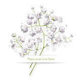 Маленький букет белых цветков Стоковая Фотография