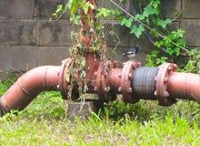 Маленький восточный робин сороки стоя на красной старой трубе firewater Стоковые Изображения