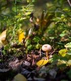Маленький грибной расти в лесе стоковые изображения rf