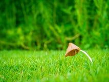 Маленький гриб с росой в саде Стоковые Изображения RF