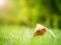 Маленький гриб с росой на утре Стоковое Изображение