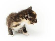 Маленький забавляя запятнанный котенок Стоковое Изображение