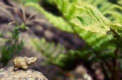 Маленький динозавр Стоковое Изображение RF