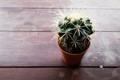 Маленький кактус Стоковые Изображения
