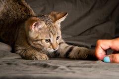 Маленький котенок в смешном представлении Стоковые Изображения RF