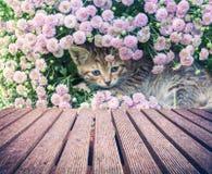 Маленький котенок в цветках Стоковые Изображения