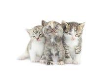 Маленький котенок 3 на белизне Стоковая Фотография