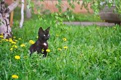 Маленький котенок сидя в траве Стоковое Фото