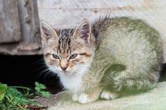 Маленький котенок сидя на траве Стоковая Фотография RF