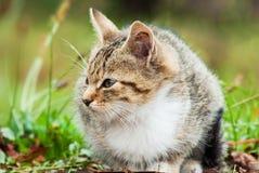 Маленький котенок сидя на траве Стоковое Фото