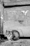 Маленький котенок сидя на траве Стоковые Изображения RF