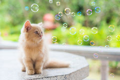 Маленький котенок смотрит на пузырях мыла Стоковая Фотография RF