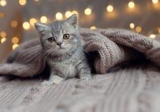Маленький котенок спать под blan Стоковое Изображение