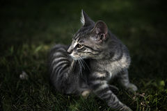 Маленький котенок Стоковое Изображение RF