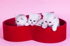 Маленький котенок Стоковые Изображения RF